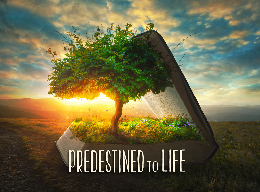 190906 Predestined To Life